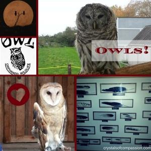 OWL owls (1)