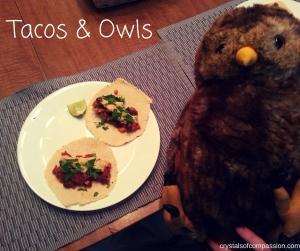 Tacos & Owls