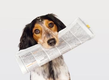 pet_news
